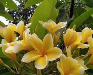 雨季真っただ中のバリ島です。
