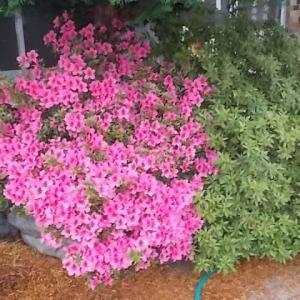 今咲いている近隣花