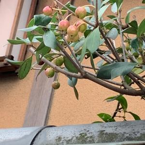 日常の大切さ…可愛い実の成る庭木に気づいて