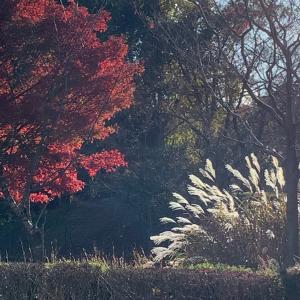 休憩時間に京都宝ヶ池をウォーキング