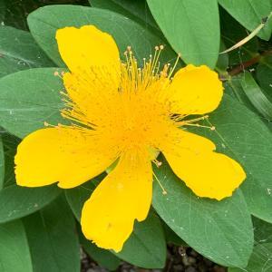 ウォーキング…季節の花に癒されます