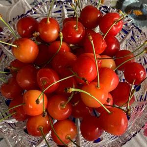 旬の果物が届きました