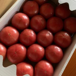今年も無農薬のトマトが届きました