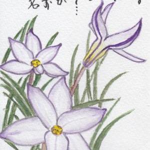 2021年春コレクション⑦『名もなき花の』