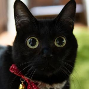 黒猫は不吉?幸運を呼ぶ?