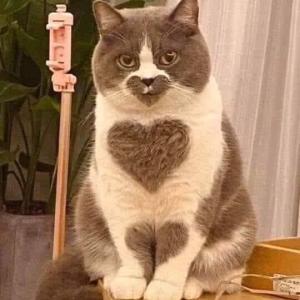 ネコのスリスリ