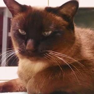 猫ハラスメント