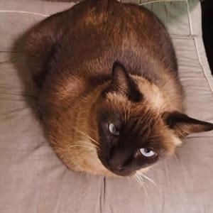 ネコの毛色と性格