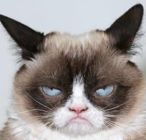 世界一不機嫌なネコ