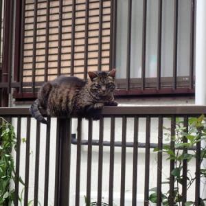 ネコ飼育のための支出