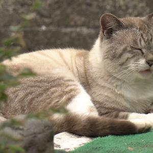 猫の島の世代交代劇