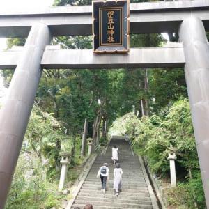 伊豆山神社で死んでいる猫発見!