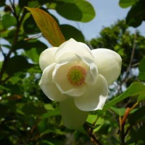 季節の花便り・・・12号