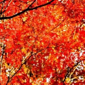 和田山の紅葉