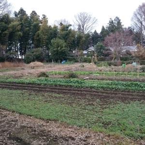 矢田城(群馬県)