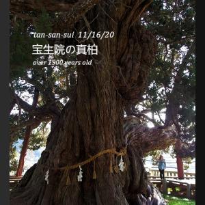 GOTOで1泊小豆島旅行4