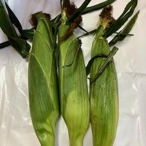 トウモロコシの皮の使い道