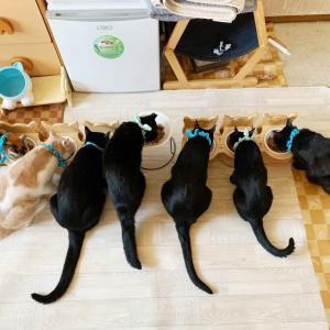 ご飯の時の攻防戦