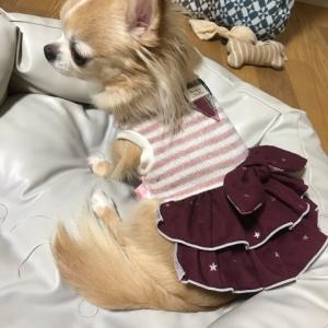 秋支度♪ボルドーわんこ服
