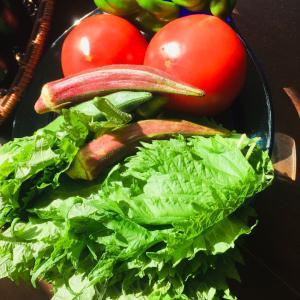 831野菜の日