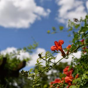 ◆梅雨を忘れて(千葉市都市緑化植物園)