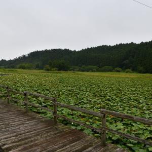 ◆「とんぼの沼」の録が寂しくて国吉駅へ(いすみ市)