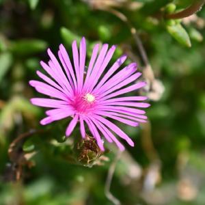 ◆ヒマワリ畑周辺の花(大網白里市)