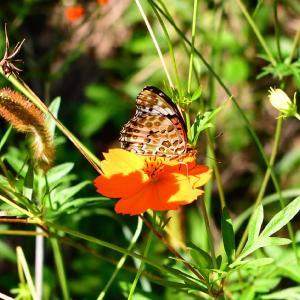◆この時季の蝶々と花