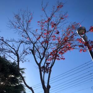 【】2021年1月2日の空♪