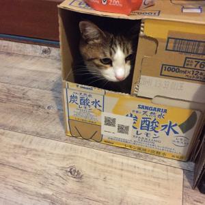 箱より梅吉くん!