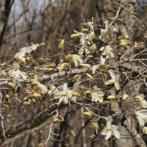 渓に咲く花など