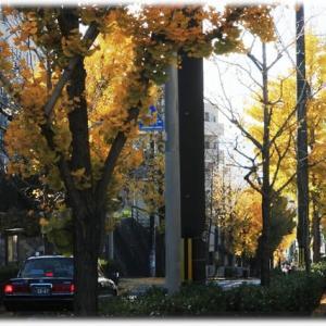 枯れ行く秋の気配