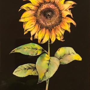 夏の花と言えば