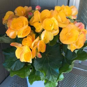 お家時間とお花