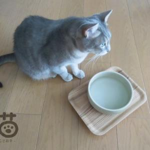 KINTO*猫用のお水のうつわの下に。