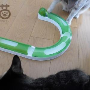 catit*プレイサーキットを、猫に気に入ってもらう工夫。