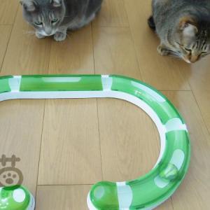 catit*プレイサーキットで、ねこあつめ。