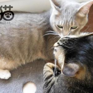 猫好き猫アレルギー*必須のマスクと、ひそかな快感。