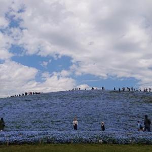 青い絨毯の丘