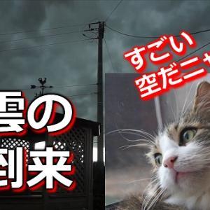 【動画】夏の嵐とメインクーン・マロ