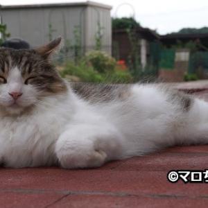 【動画】庭でくつろぐ猫