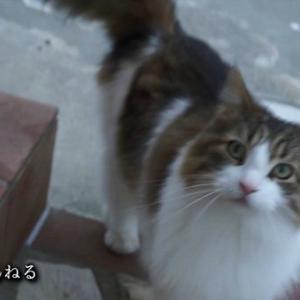 【動画】夕方5時「お家に帰るよ」で帰宅する猫