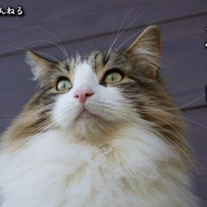 猫の日・マロの日