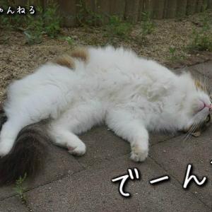 庭で寝転がる猫