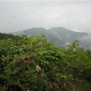 自分が刈った登山道でも登ろうかな。