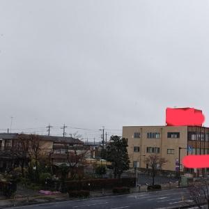 桜満開なのに雪が降ってる(ー_ー;)