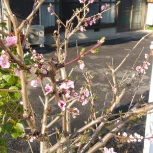春ですねぇ~