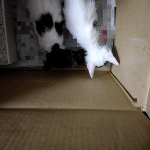 子猫保護生活~里親探し編~