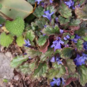 春の花、次々と開花