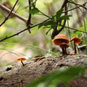 秋を彩る6